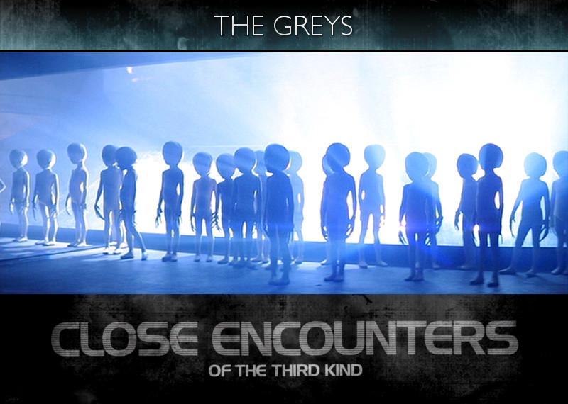 The Greys